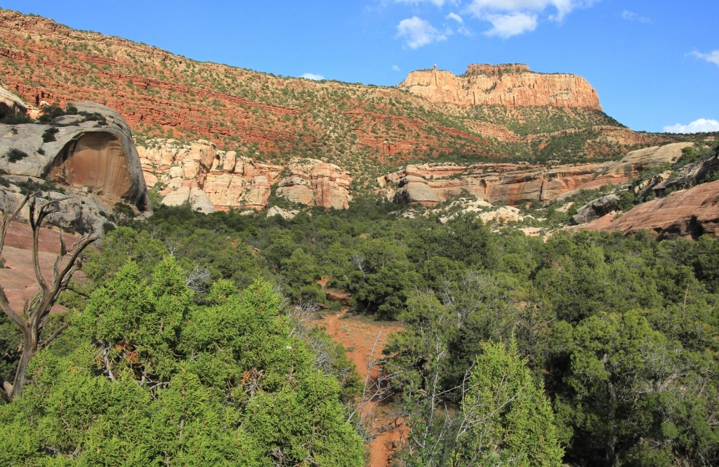 looking back up at Cathedral Butte TH from bottom of canyon