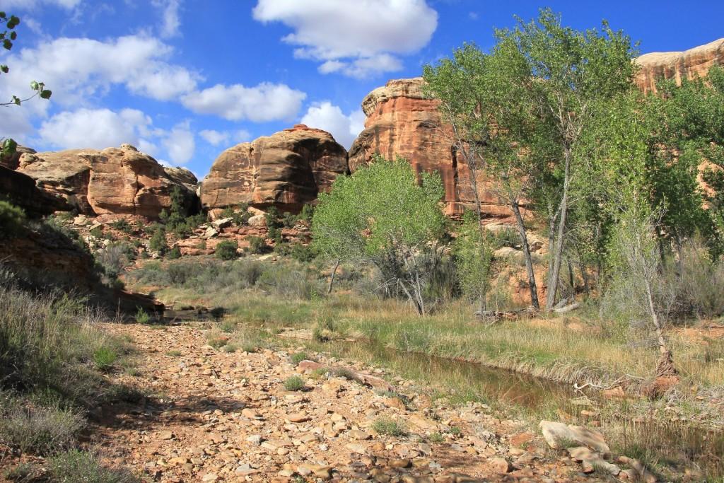 Salt Creek near camp