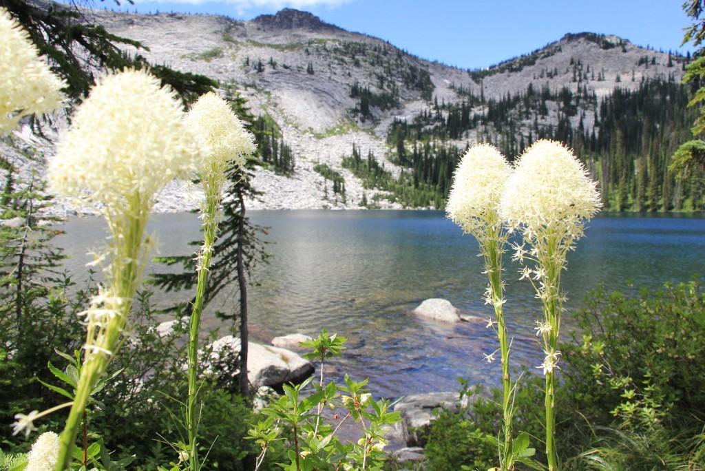 bear grass at Harrison Lake