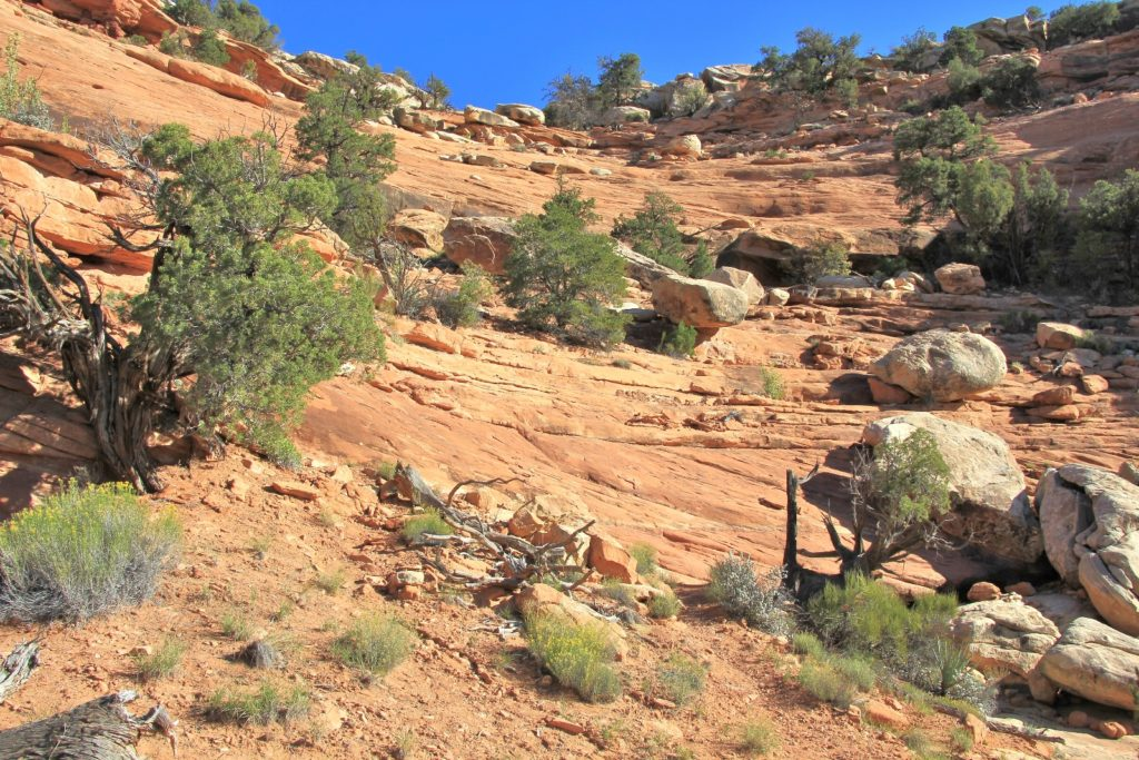 Se Utah S Cedar Mesa Fallen Roof Amp Citadel Ruins Oct