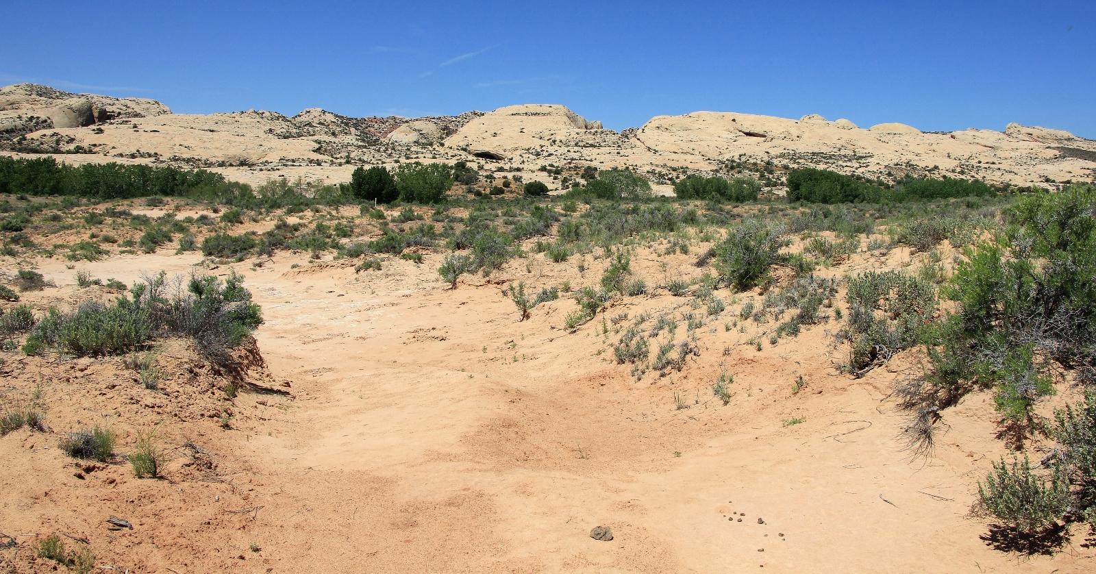 05-11-15 Comb Ridge explorations (88)