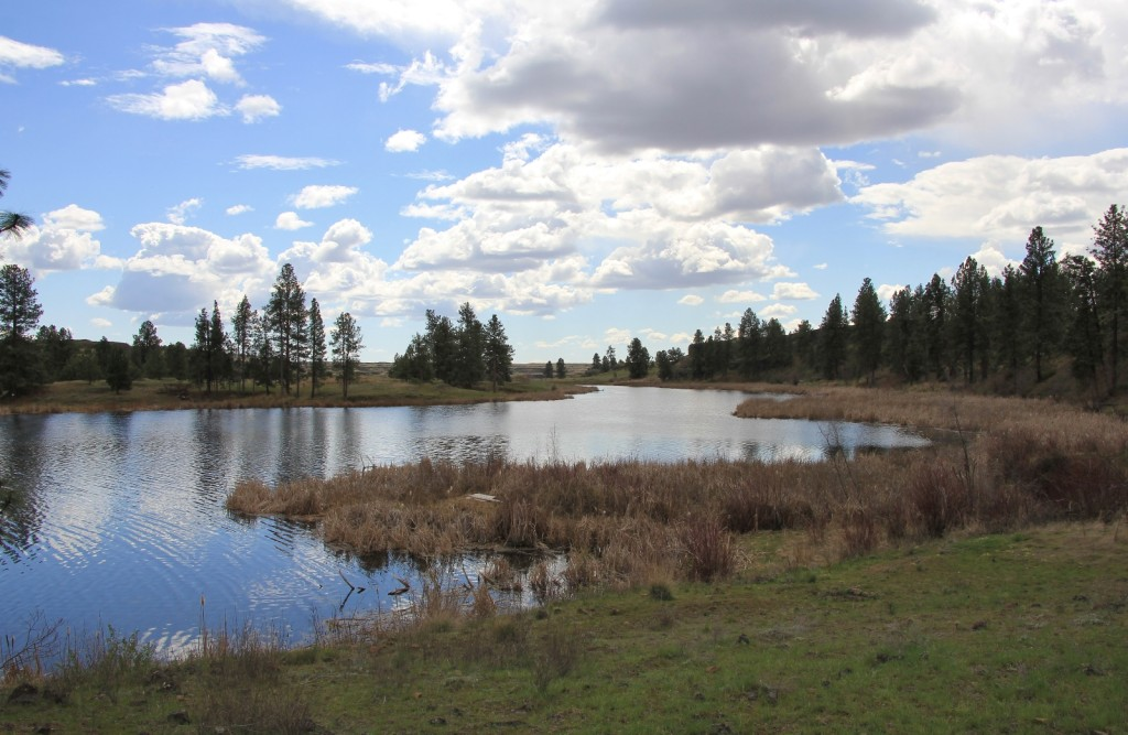 Fishtrap Lake outlet