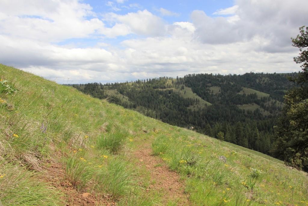 05-03-14 Chico - Davis Creek hike (34)