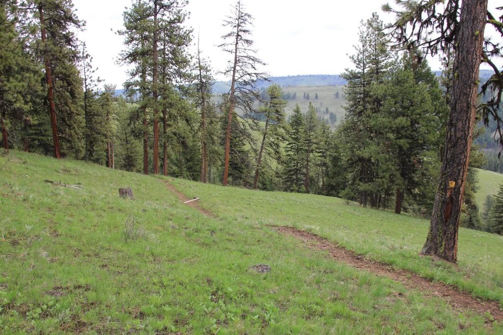 05-03-14 Chico - Davis Creek hike (5)