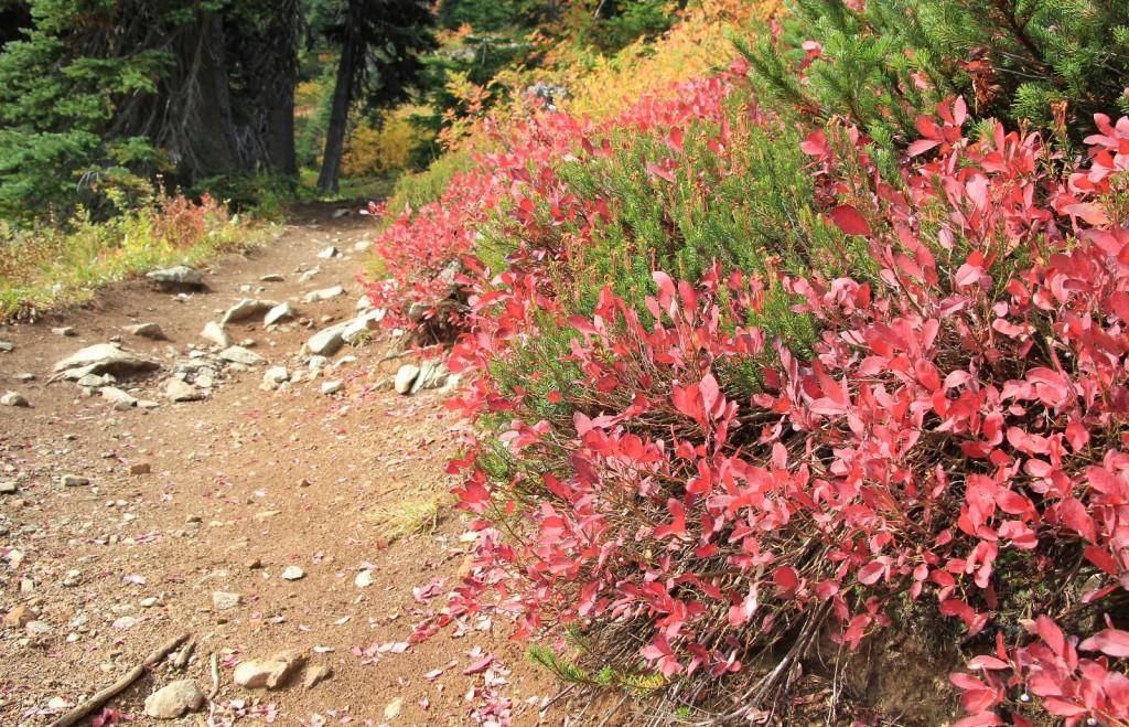 09-22-14 Maple-Heather Pass trail (43)