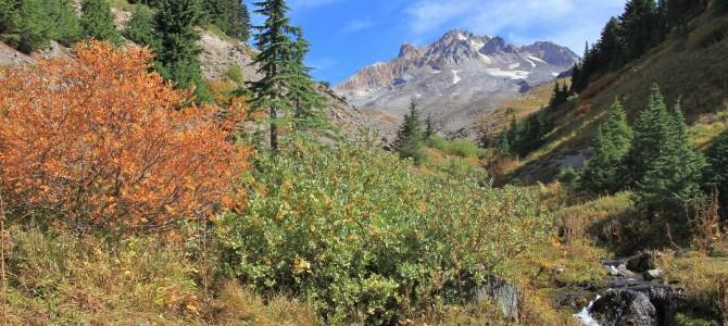 Mt. Hood: Paradise Park, September 2015