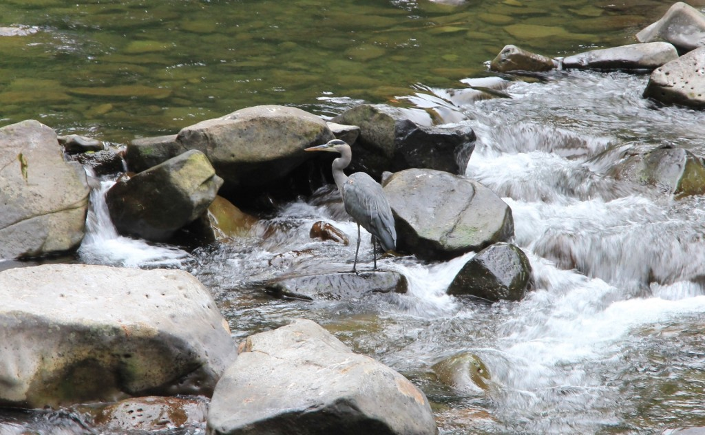 09-14-15 Eagle Creek hike (2)