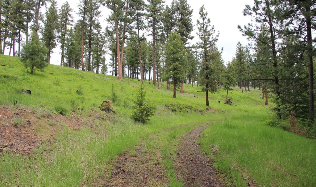05-22-16 Sheep Gulch (56)