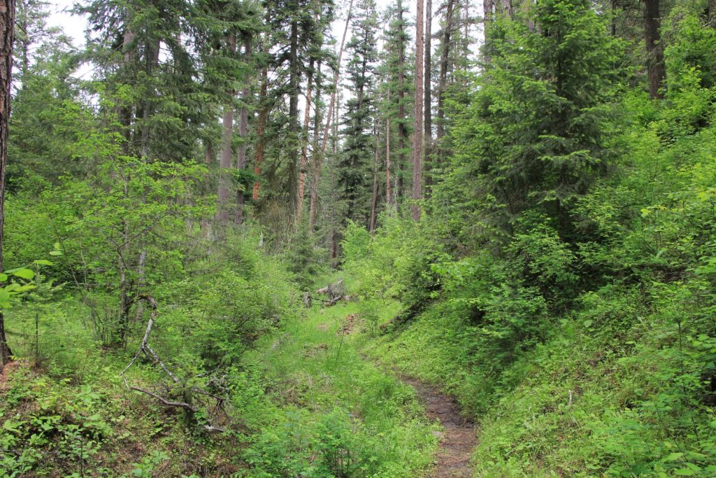 05-22-16 Sheep Gulch (67)