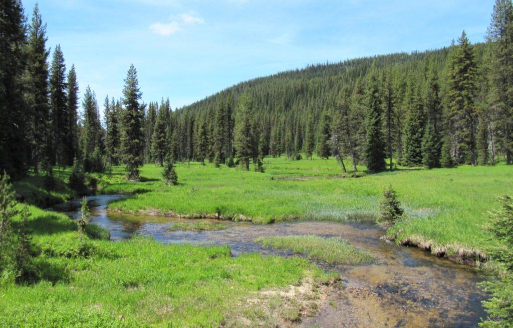 7-4-10 Elk Summit (15)