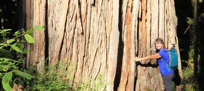California Giants: Jedediah Smith Redwoods State Park, Sept 2016